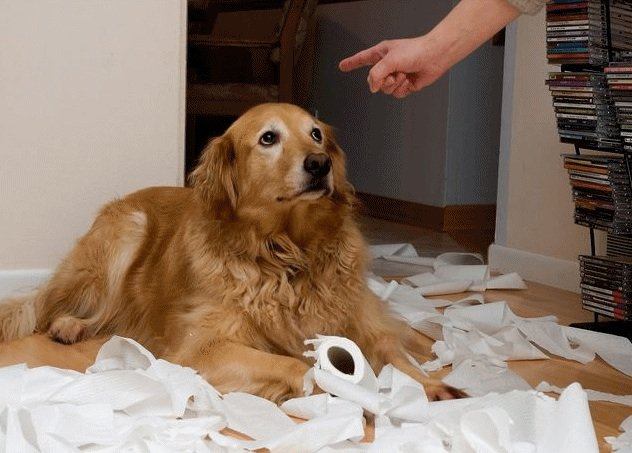 sad_dogs12