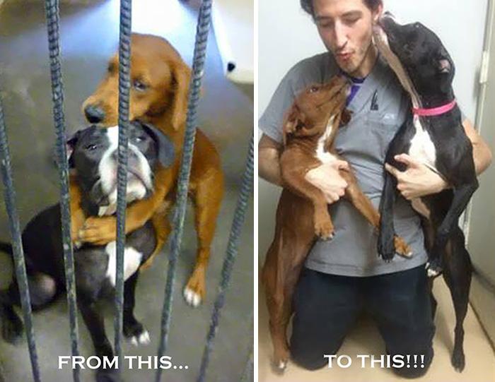 shelter-dogs-hug-photo-viral-save-life-euthanasia-kala-keira-angels-among-us-5 (1)